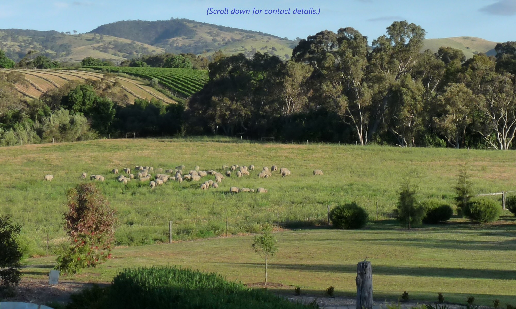 Contact us to enjoy the beautiful surrounds in the heart of the Barossa