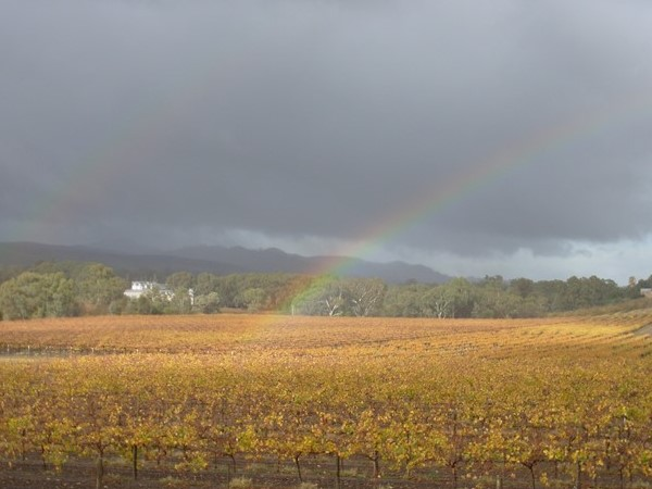 Autumn in the Barossa