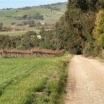 Halletts Valley Hideaway - peaceful vineyard surrounds